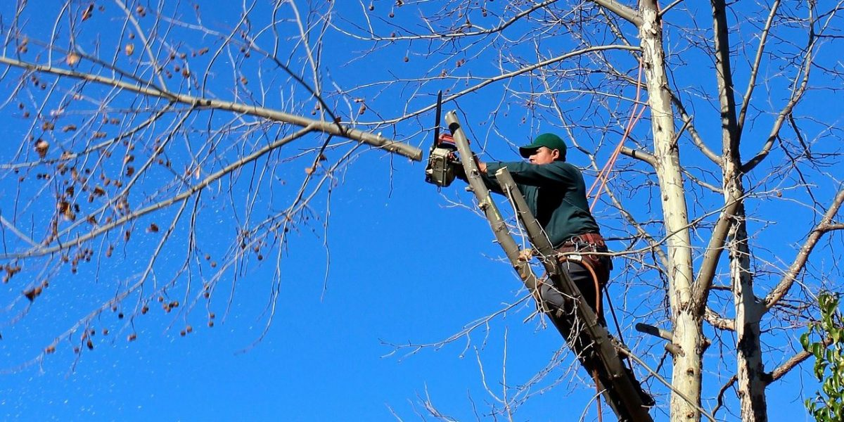 Why Tree Trimming is The Right Thing to Opt For