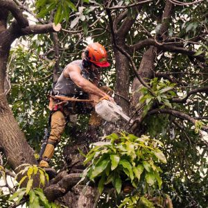 Trees-cutting-and-pruning
