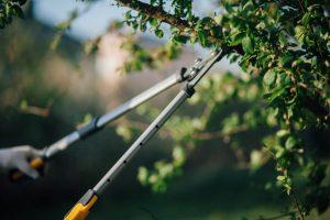 Top tree service