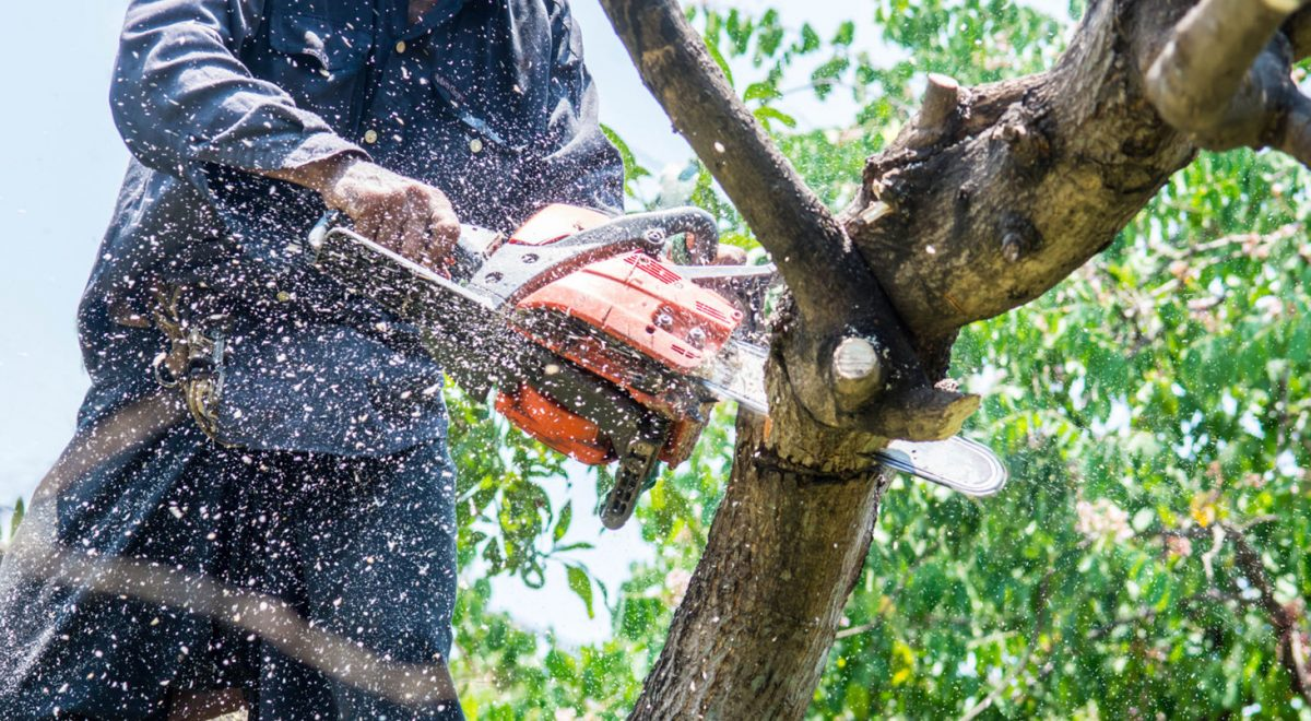 Look at These Things Before Hiring a Tree Service Company