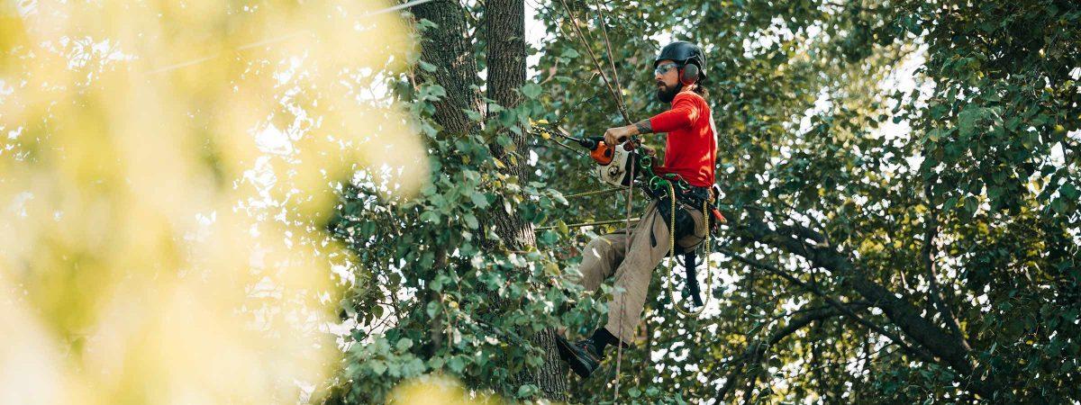 arborist job education requirements
