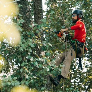 arborist job education requirements