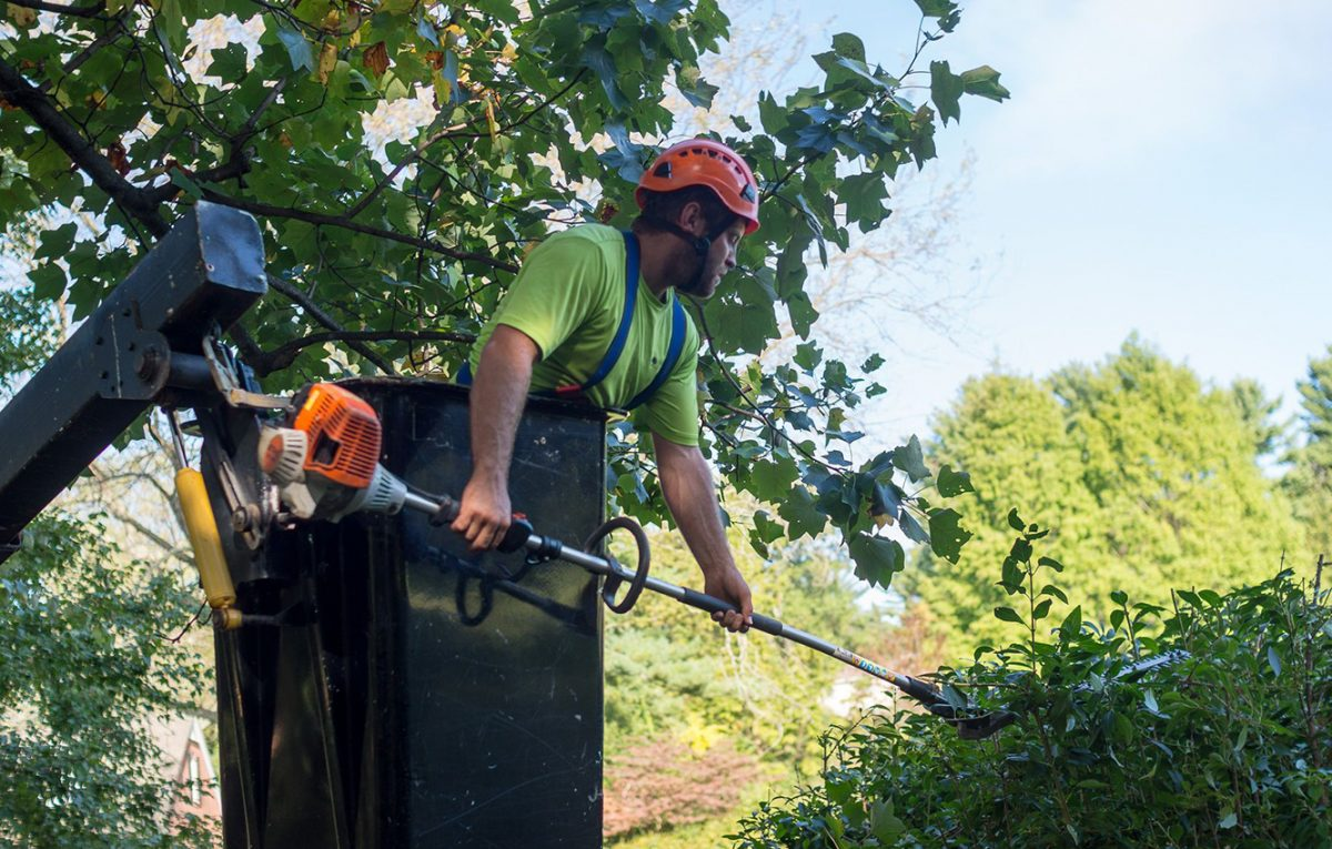 Tree Removal For Better Driveways